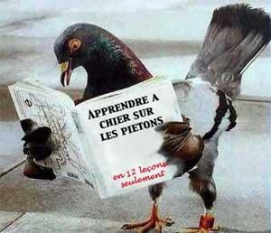 pigeon_chiant_pietons